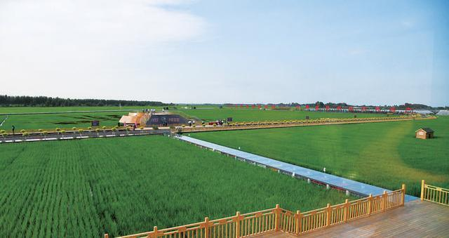 争做现代化农业基本建设标杆——哈尔滨市执行乡村振兴发展战略当场推动大会具体描述